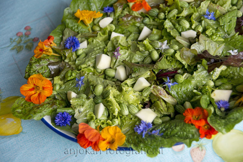 Picture, background, beautiful, colorful, copyspace, diet, dish, eatable, edible, flower, food, fresh, garden, green, healthy, lettuce, lunch, mixed, nasturtium, nature, nutrition, orange, red, salad, summer, tomato, tomatoe, vegetarian, white, yellow